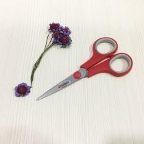 SS Scissors (Small)