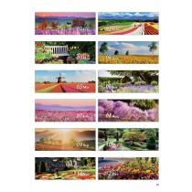 8802 - Full Bloom Season 花花世界